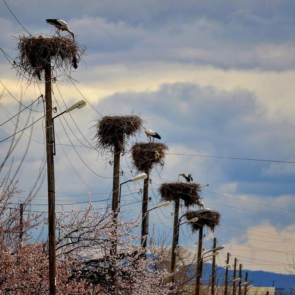 Armenia in spring